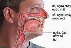 Tác dụng của thuốc Loratadin