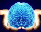 những dưỡng chất có trong thuốc bổ não